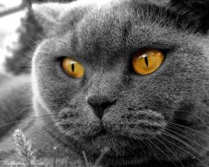 Obrazki Koty Kotki I Kocięta
