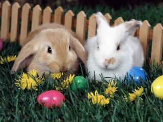 Obrazek: Wielkanocne pisanki