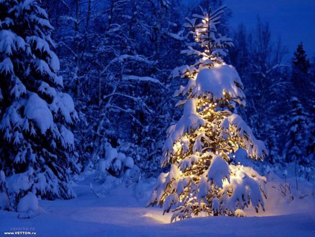 http://swiat-obrazkow.pl/obrazy/3/294/oswietlona_choinka_w_lesie.jpg